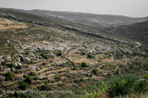 Palestine-Israel-Battir-Terraces-5112