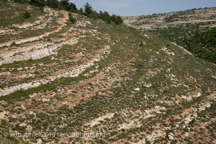 In the light palestine israel the terraces of battir for 10180 old well terrace