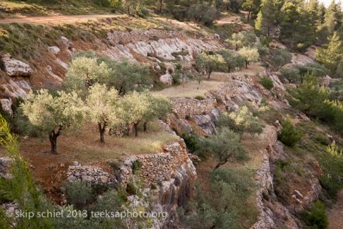 Palestine-Israel-Battir-Terraces-5154