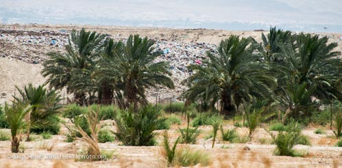 Palestine-Jordan River Valley-7404