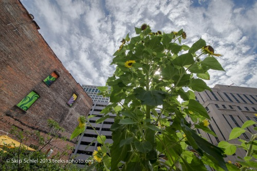 Detroit-Urban_agriculture-9404