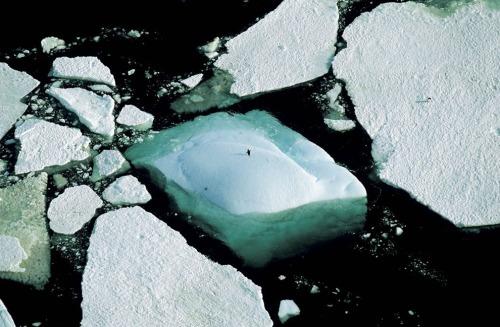 icebergs-and-adelie-penguin-adelie-land-antarctica-arthus-bertrand