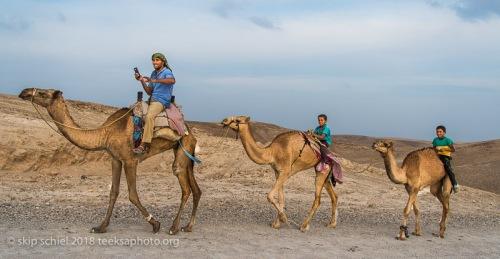 camels-palestine-bedouin-refugee_dsc0943