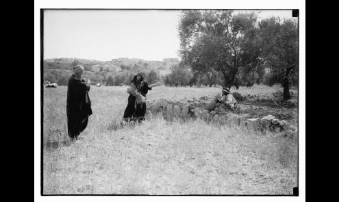 Ruth series. Beit Sahur & Bethlehem. Harvesting, etc-1898